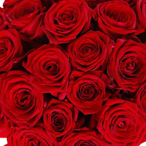 Шляпная коробка с букетом из 25 розы Эквадор (Premium)